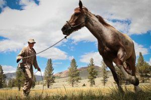bring-horse